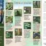 O.O. Denny Park Trail Guide