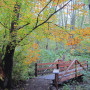 Trails in Big Finn Hill Park