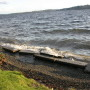 Kirkland Requests Finn Hill Input for Surface Water Master Plan