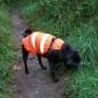 DOG BLOG:  D is for Doug the Pug and … Don't make me wear that Dorky orange safety vest.