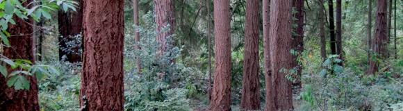 Hike Finn Hill parks this summer