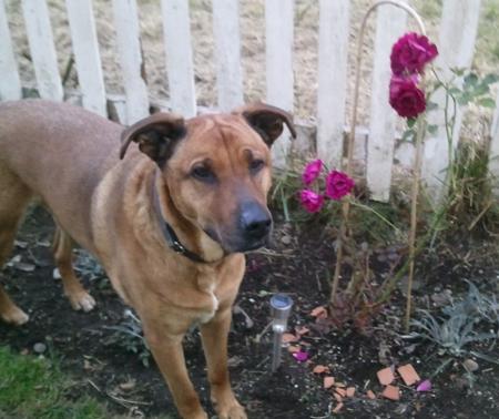Elwood-Dog-Blog