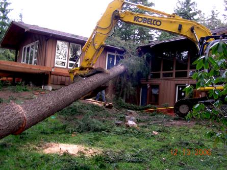 Fallen-tree-at-Teresas