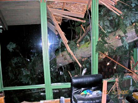 Fallen-tree-at-night