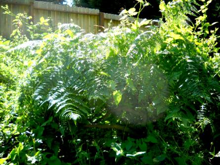 Oregon Ash 4 engulfed in jungle.