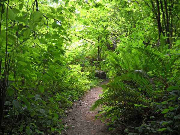 Trail-scene-in-west-Woodlands-2013-6-16