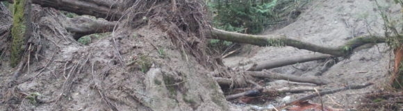Landslide in Big Finn Hill Park