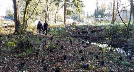 IPC stream restoration planting